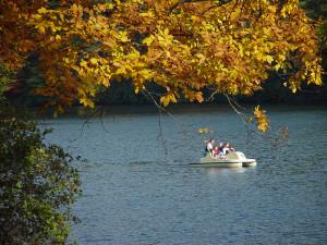 vogel-park-paddleboat